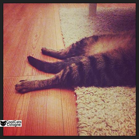 Instagram #cat