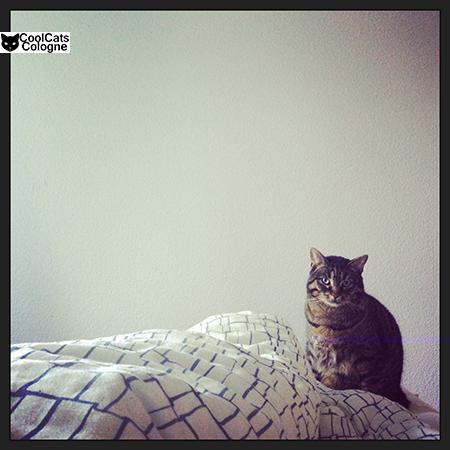 instagram bild kater. Black Bedroom Furniture Sets. Home Design Ideas