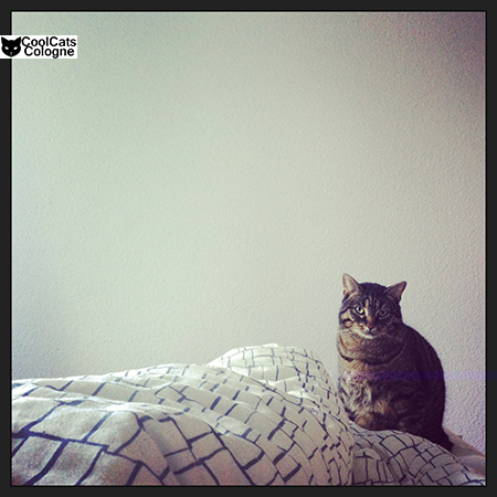 Instagram Katze morgens