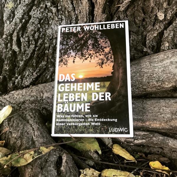 Buch Das geheime Leben der Bäume